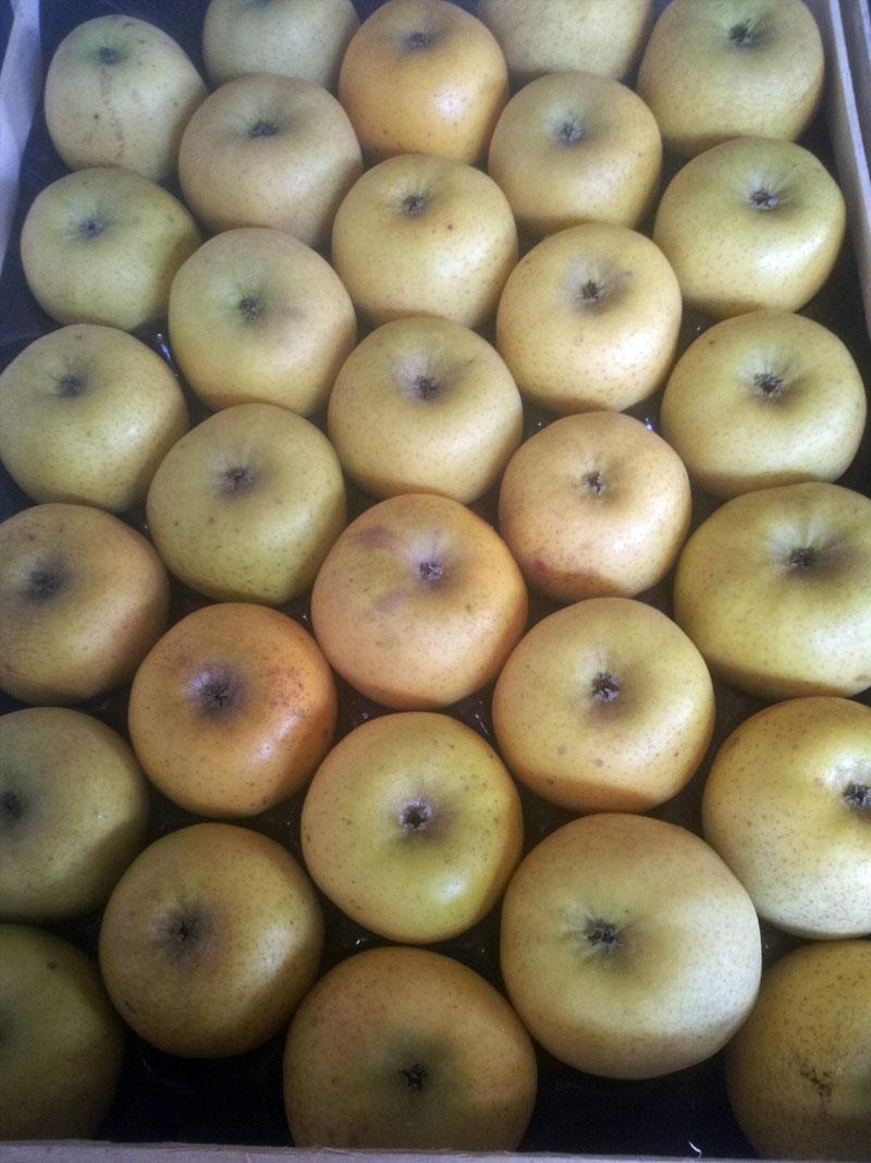 production de fruits